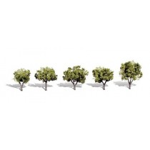 TR3546 EARLY LIGHT 5 PACK TREE